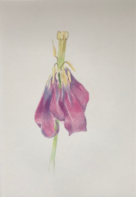 Kleurpotlood-op-papier-2-29,7x42cm